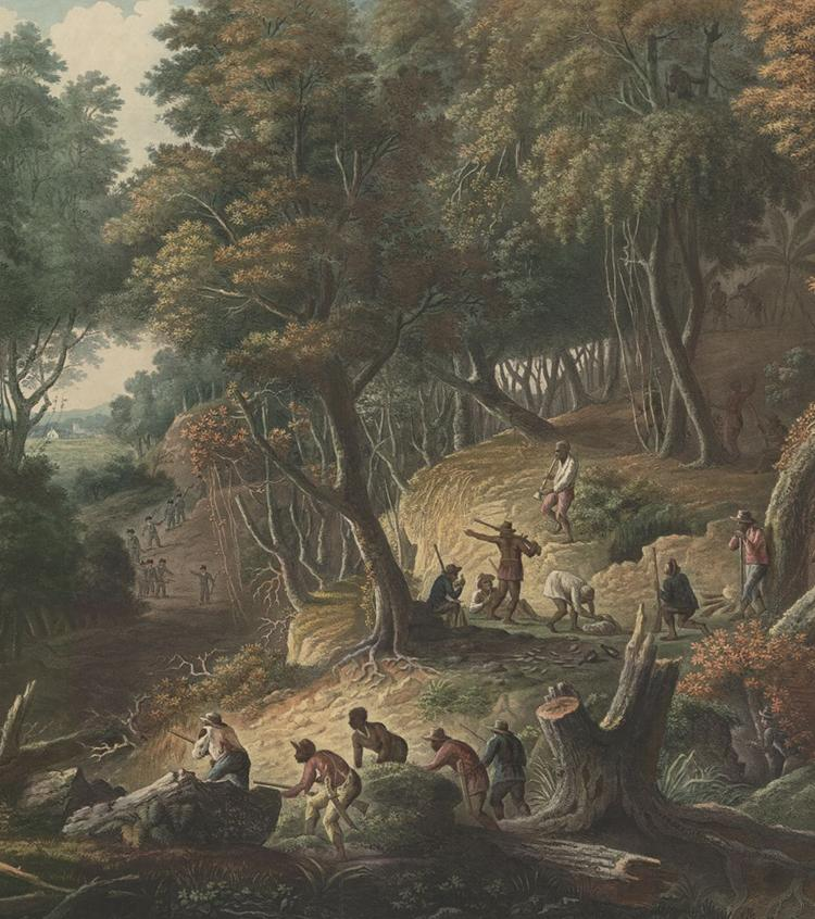 Jamaican Maroons ambush on the Dromilly Estate